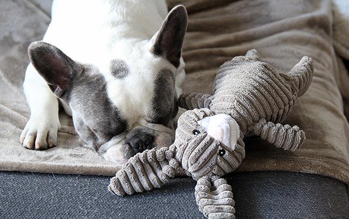 Doggy-box || Maandelijkse box voor je hond!